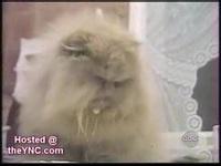 gatos - vídeos engraçados 1.wmv