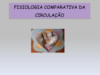 Fisiologia Comparativa da Circulação.pdf