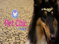Pet_Chic_English.mpeg