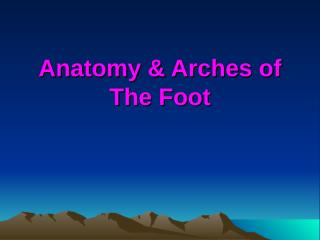 Arches of foot.ppt